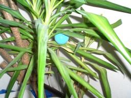 Ballpflanze